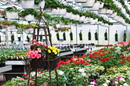 Greenhouse flowers available all Summer